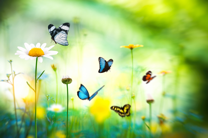 Butterfly-Meadow-507030898_727x484.jpeg