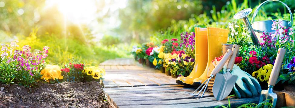 Gardening---Equipment-Flowerbed-In-Sunny-Garden-642945796_979x360.jpeg