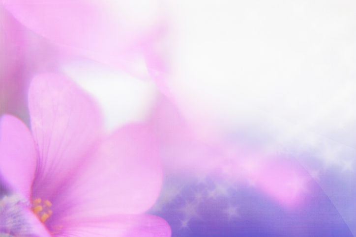 African-Violet-90399316.jpeg