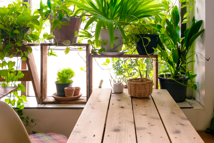 Table-side-the-window-and-plants-pot-524727486_727x485.jpeg