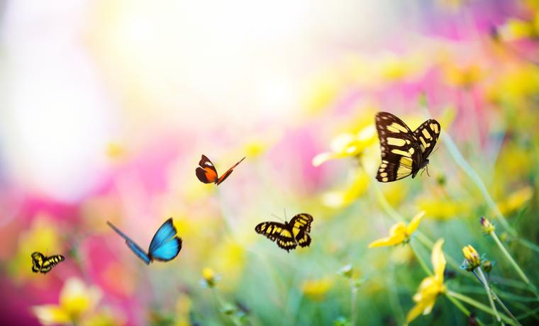 Butterfly-Garden-507031024_763x462.jpeg