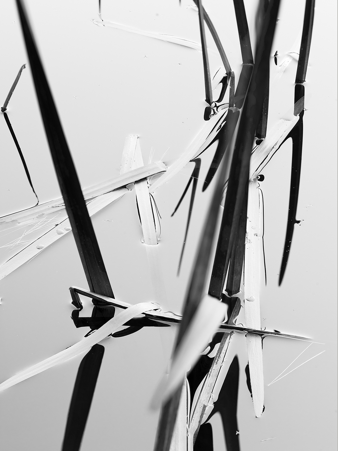 Reeds Abstract.jpg