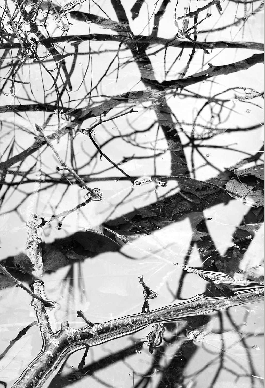 Refections & Branch.jpg