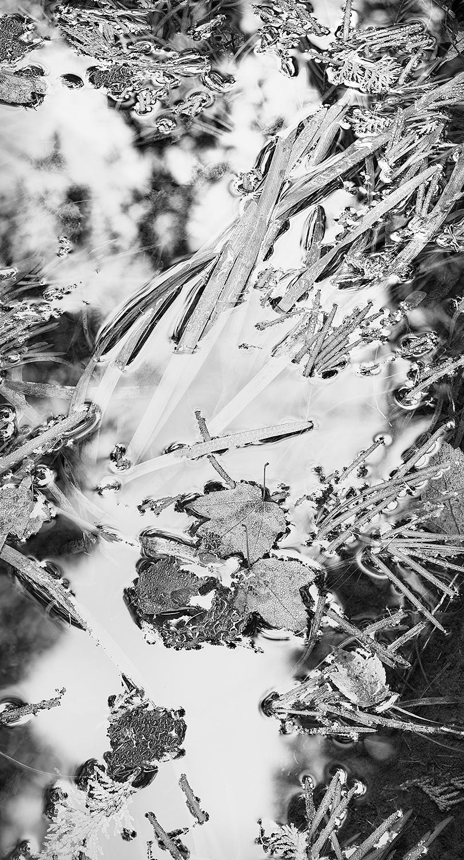 Reeds-Leaves-Stream.jpg