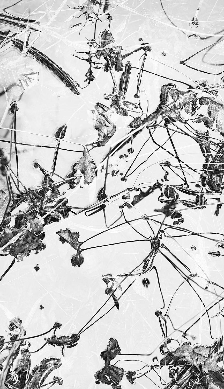 Leaf-Black-Lines.jpg