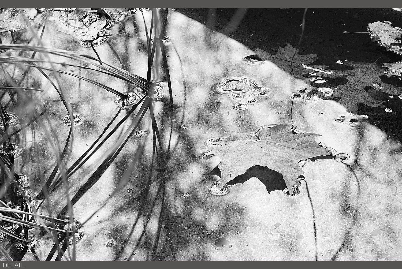 AcadiaFall2013_001473 DT.jpg