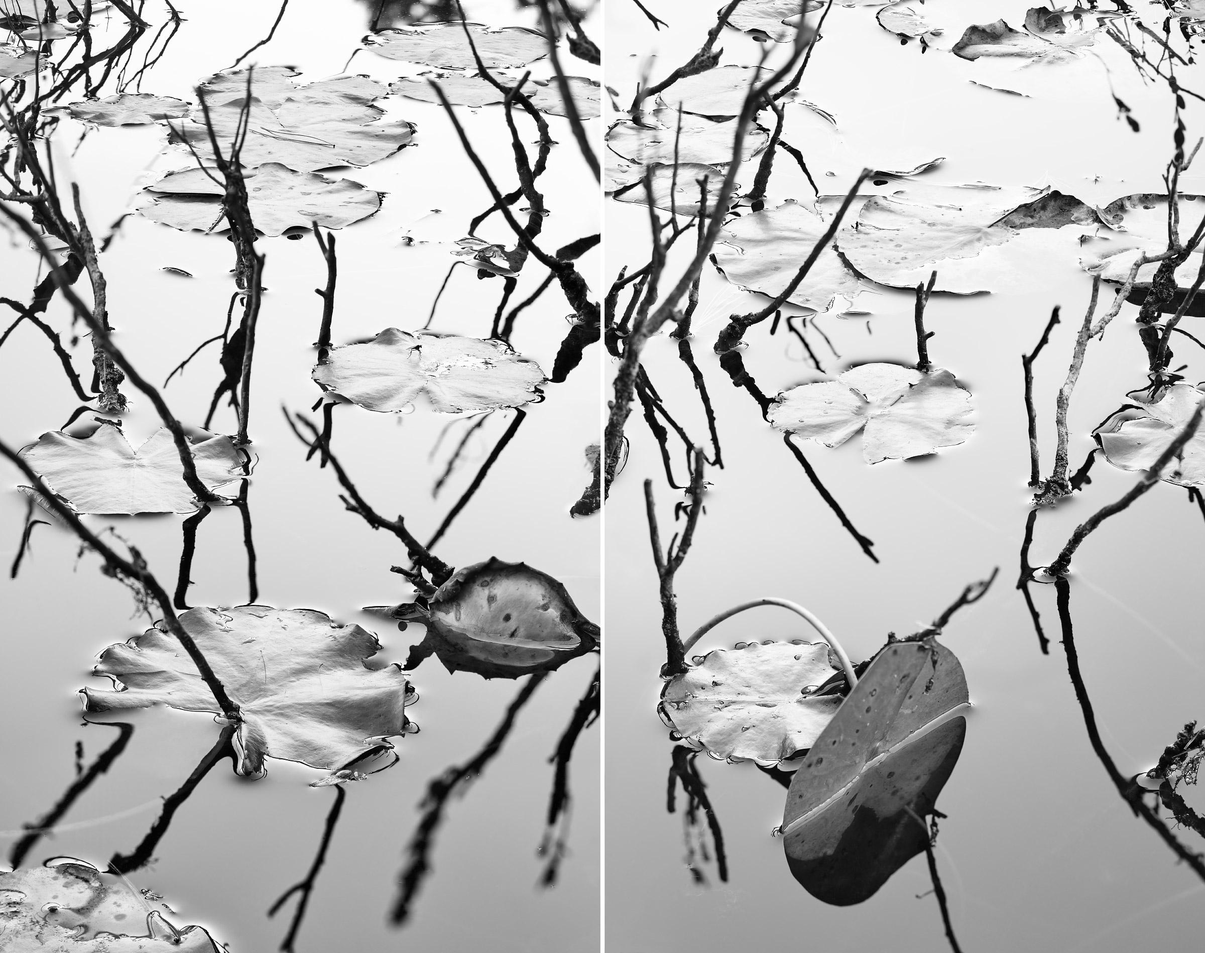 Acadia 2018 Diptych, Untitled III