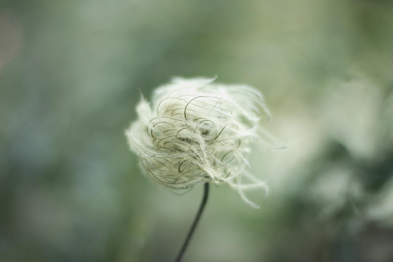 feather_plant.jpg