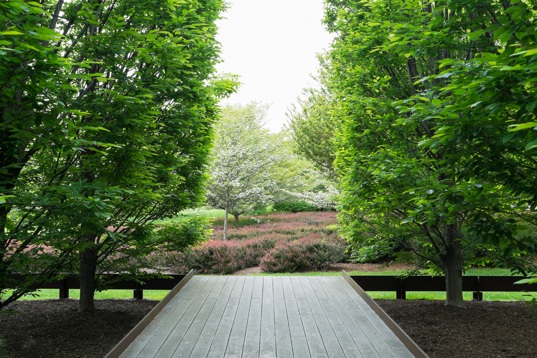 Lindsey GloverDia Trees
