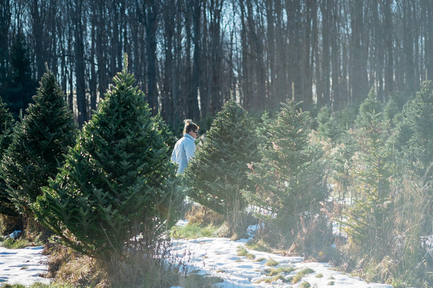 I caught this photo of my sister, Megan, searching for the perfect tree to take home with us.