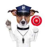 stop-dog