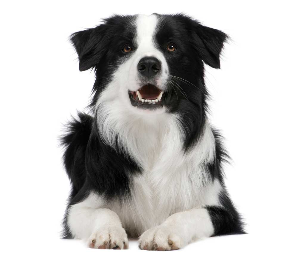 medium_dog.jpg