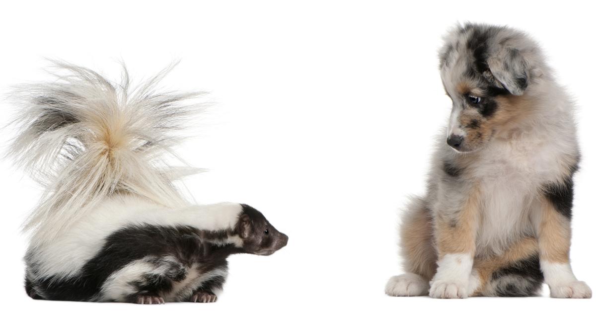 de-skunk dog and cat