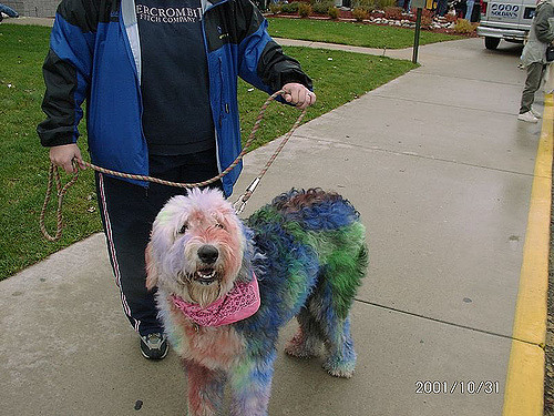 The Irreversible Damage of Dying your Dog\'s Hair — WashPaw ...