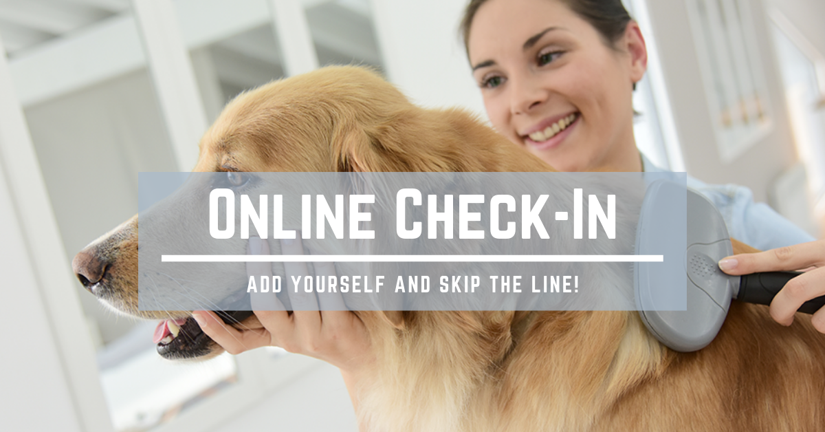 wp9299920-onlinecheckin.png