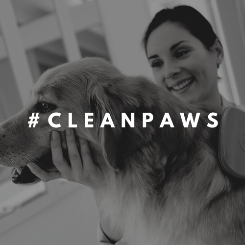 Got tagged? - Being a follower has its perks! If your post got tagged by us with #cleanpaws you are in for a treat! Click below to find out more.