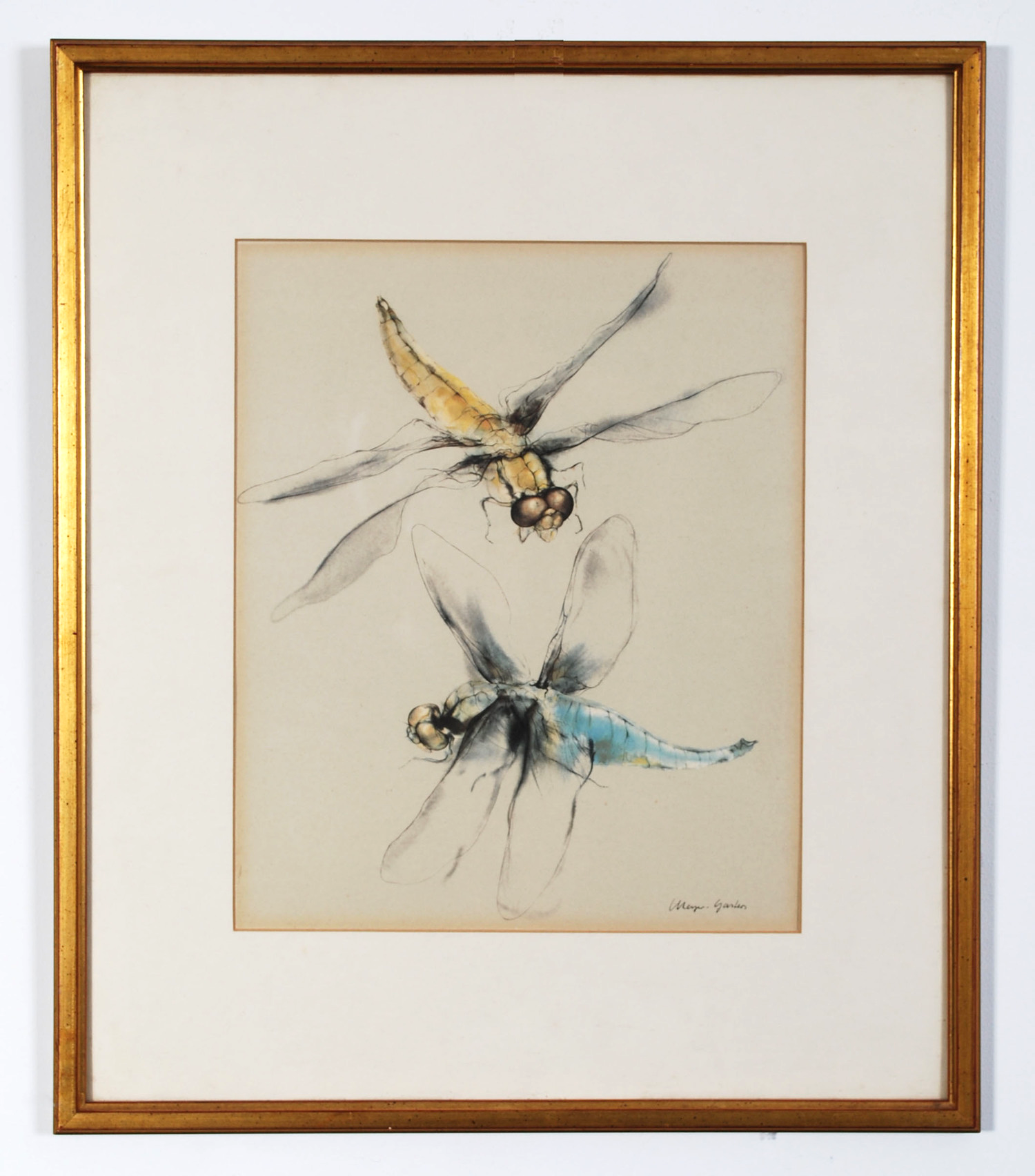 Dragonflies  - AVAILABLE