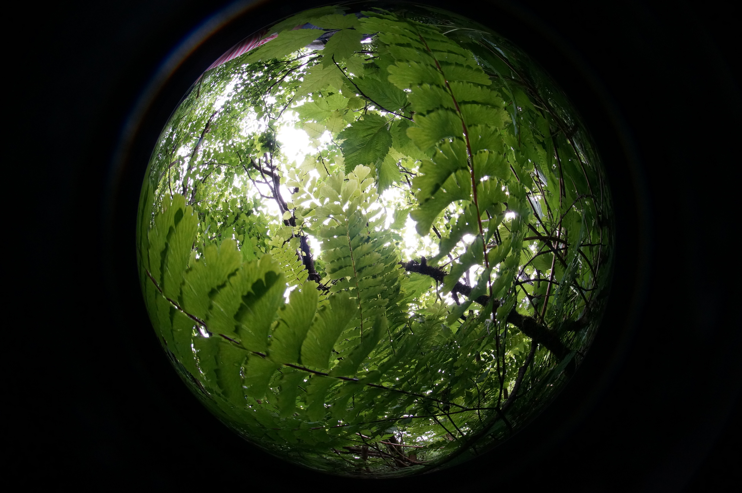 Hemispherical photos for canopy coverage