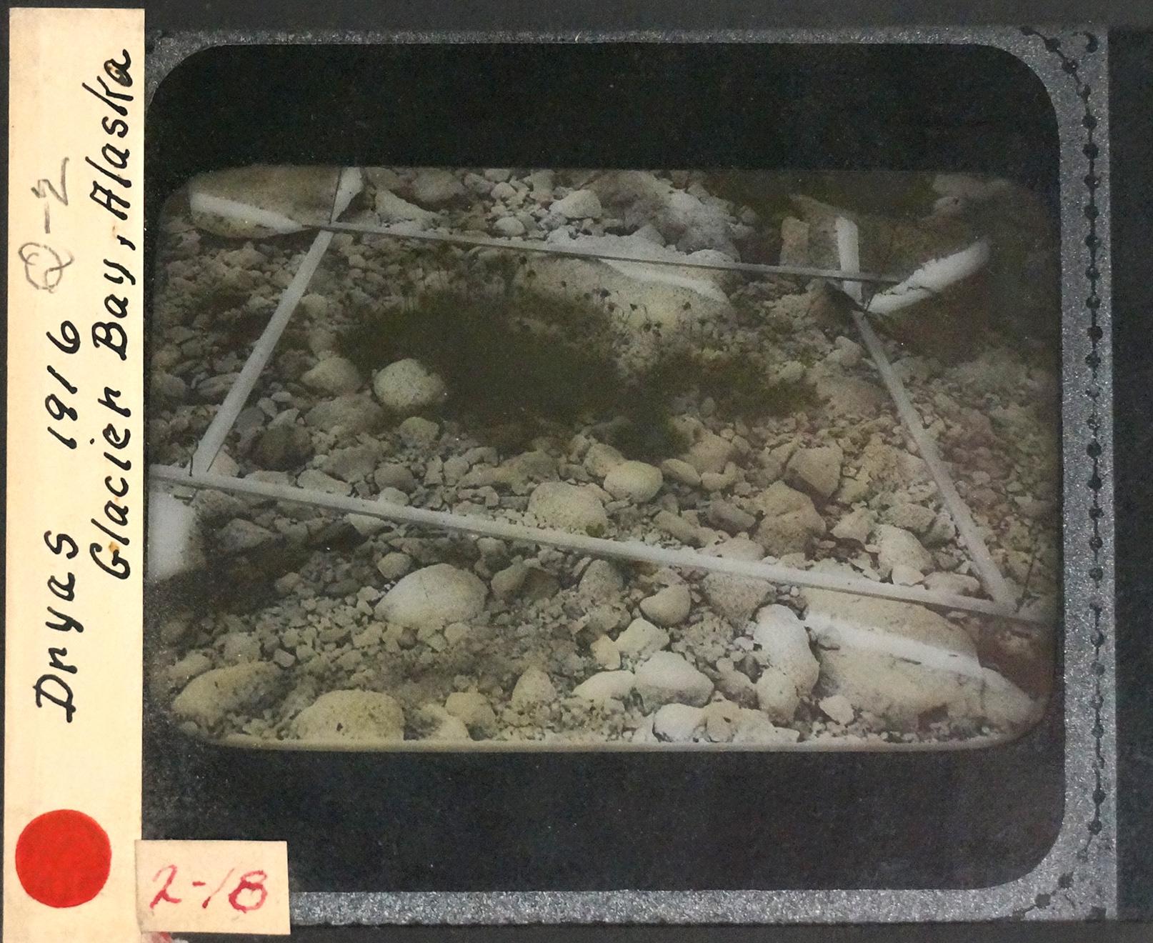 1916 Q2 sample.jpg
