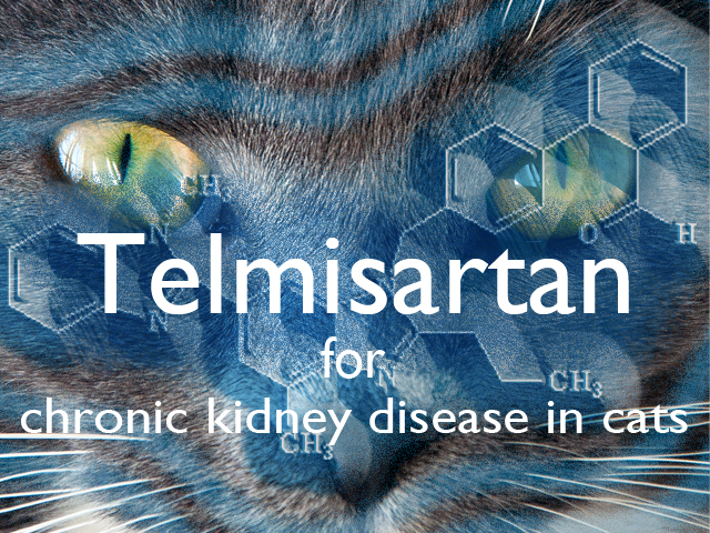 Why have we prepared this module?   Telmisartan is a new drug that is being promoted.  It is also a new class of drug in veterinary medicine.   Why should you do this module?   To know key facts about the drug and the evidence about its efficacy.  To be able to make a rational decision about its use.