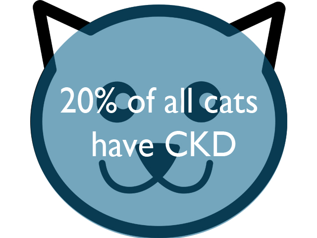 20%of-all-cats.jpg