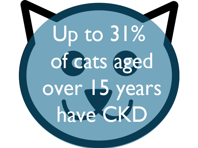31%-of-cats-over-15.jpg