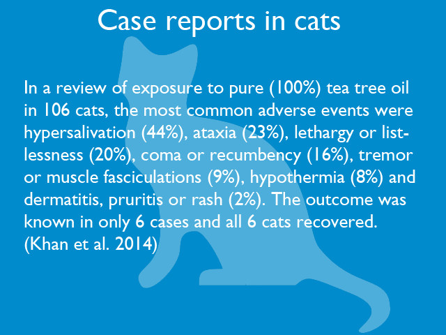 case-reports-in-cats-01.jpg