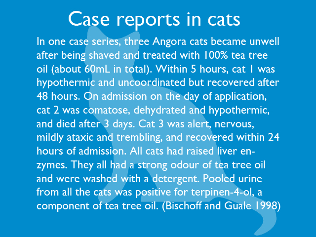 case-reports-in-cats-02.jpg