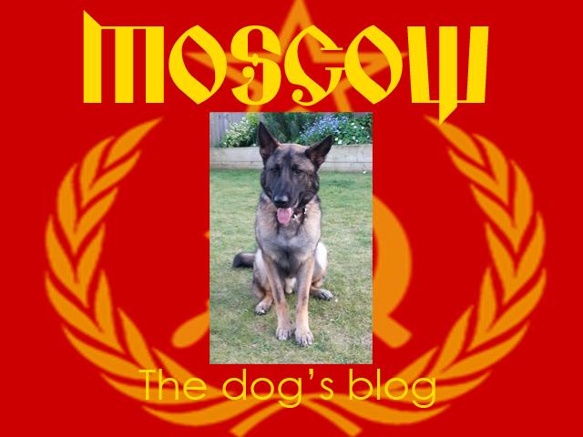 The-dogs-blog-no-3.jpg