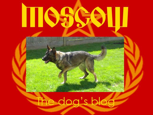 The-dogs-blog.jpg
