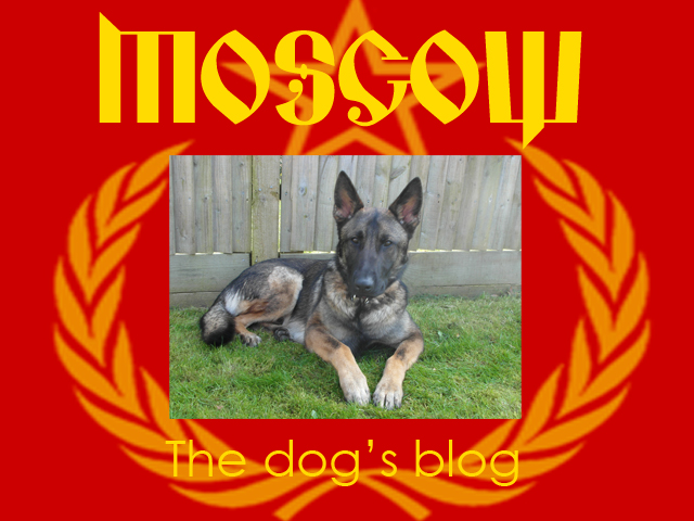 The-dogs-blog-jan-18.jpg