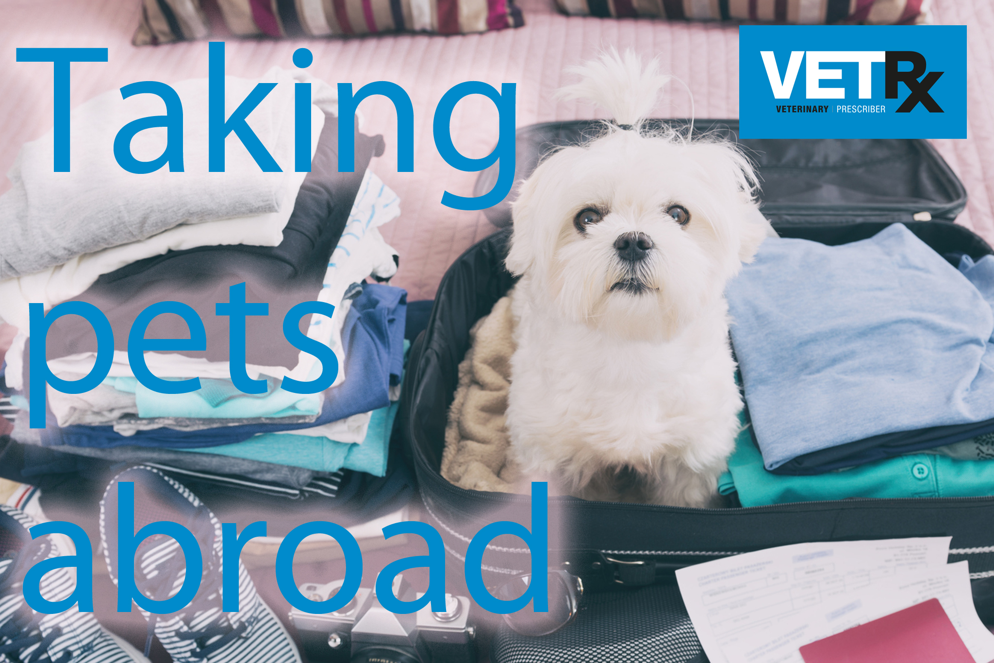 Taking-pets-abroad.jpg