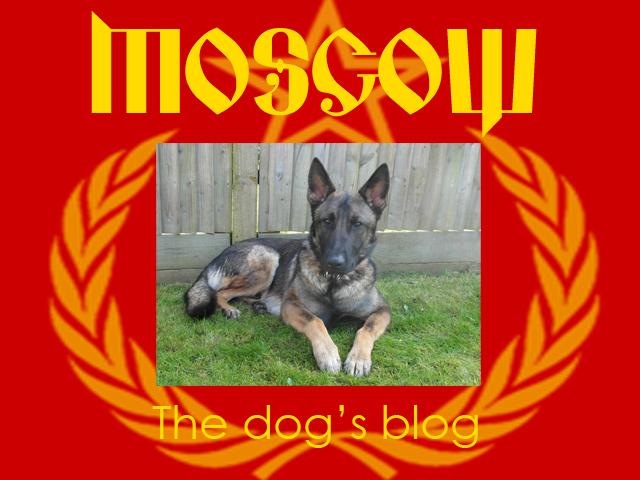 The-dogs-blog-jan-18.jpg