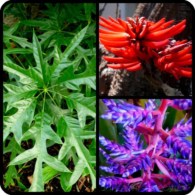 |Shefflera 'Nova' + Erythrina coralloides + Aechmea 'Del Mar'|