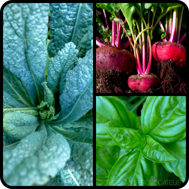  Kale, Beets, and Basil 