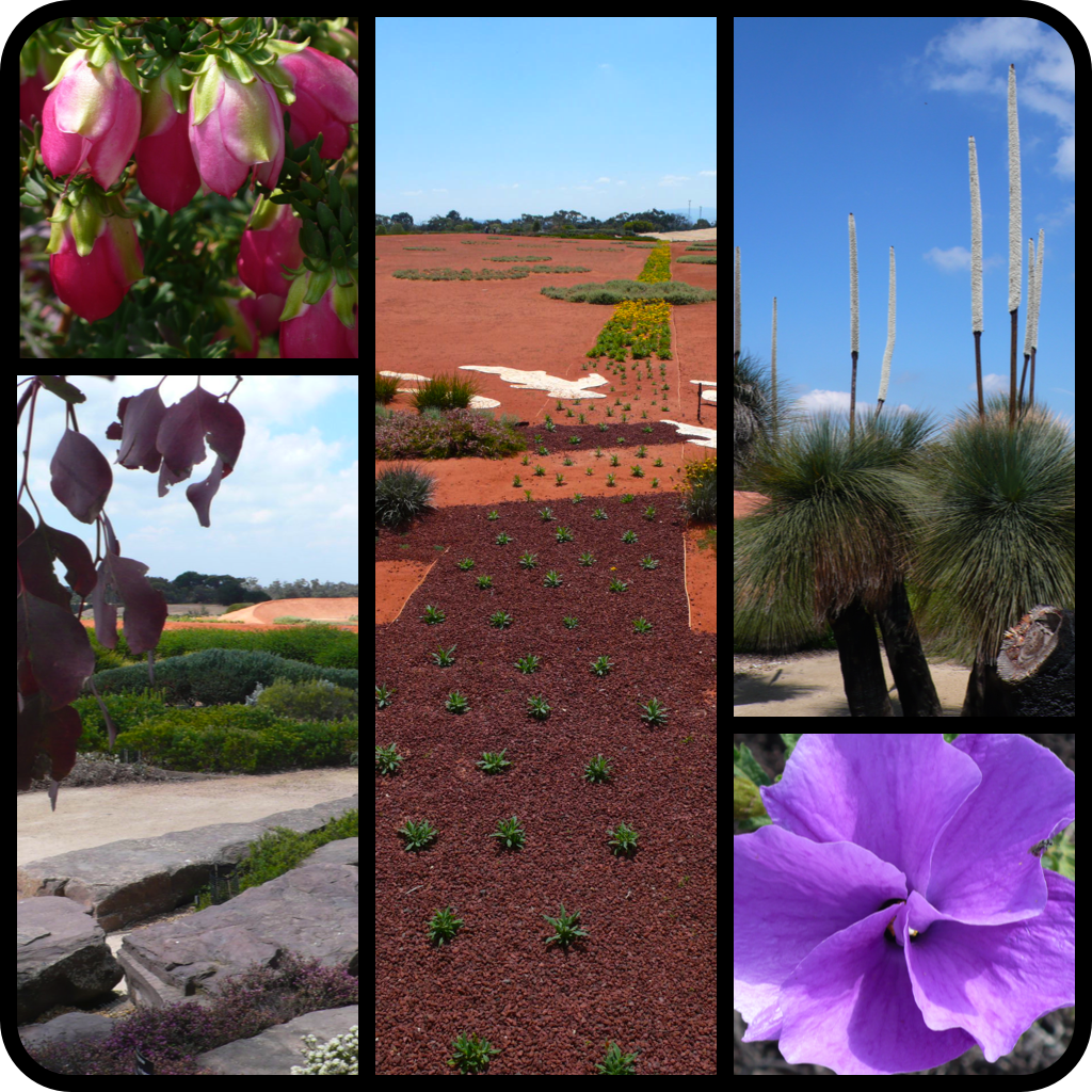 |Clockwise L to R|Darwinia lejostyla 'Coolamon Pink' in bloom|RBG Cranbourne landscape vista|Xanthorrhoea quadrangulata-Austrlain Grasstree in flower|Alyogyne huegelii-Blue Hibiscus|RBG Cranbourne landscape|