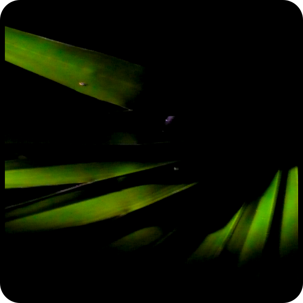 Palm Frond Night Moves.png