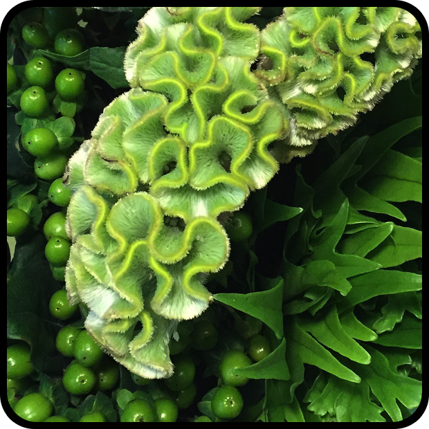Hypericum Celosia Fern Image.png