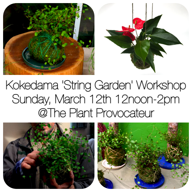 kokedama moss ball string garden workshop silverlake los angeles los feliz