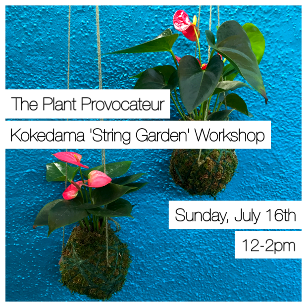 Kokedama Silverlake Japanese String Garden Workshop Garden Class in Los Angeles, Los Feliz, Atwater Village and Echo Park