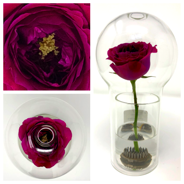 Fragrance Vase Rose Ad.png