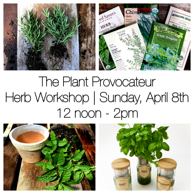 TPP Herb Workshop 4.8.18 Ad.png