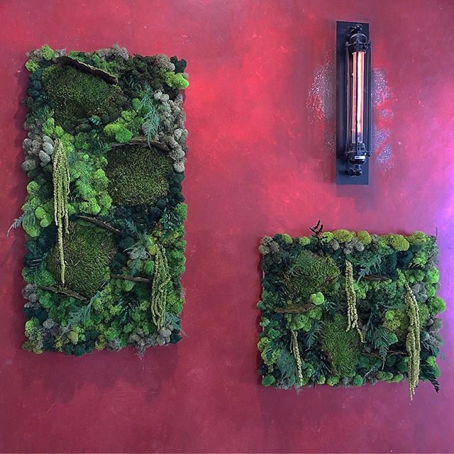 Moss Mysterio Botanical Art pieces by The Plant Provocateur. Got to see them  looking lush and beautiful, live and in concert at #muddypawcoffeela newest location in Eagle Rock the other day. Have you been? The space is absolutely lovely. They even have created a mini 'dog park' where you can chill with your cup and your pup! Definitely a destination to check out! Congrats again @muddypawla ! #plantprovocateur #eaglerock #petfriendly #cafe #moss #botanical #art #forest #calm #bringtheoutdoorsin #interiordesign #wallart #decor #nolightnoproblem #nocare #plantshop #losangeles #design #coffeeshop #plants #peaceful