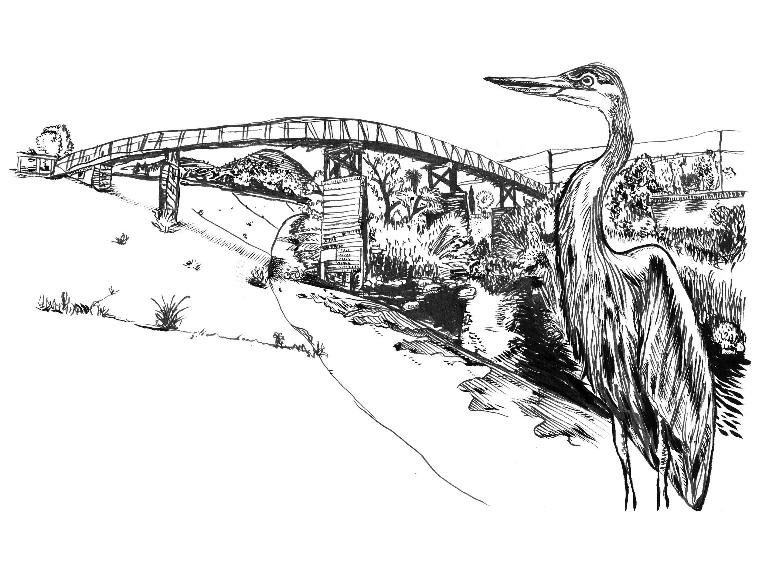 Great Blue Heron - Sunnynook Footbridge over the L.A. River, Atwater Village   - This is one of my favorite spots on the Los Angeles River. The scale of the footbridge is human and intimate, while it's height affords a great vantage point to see the natural beauty below.