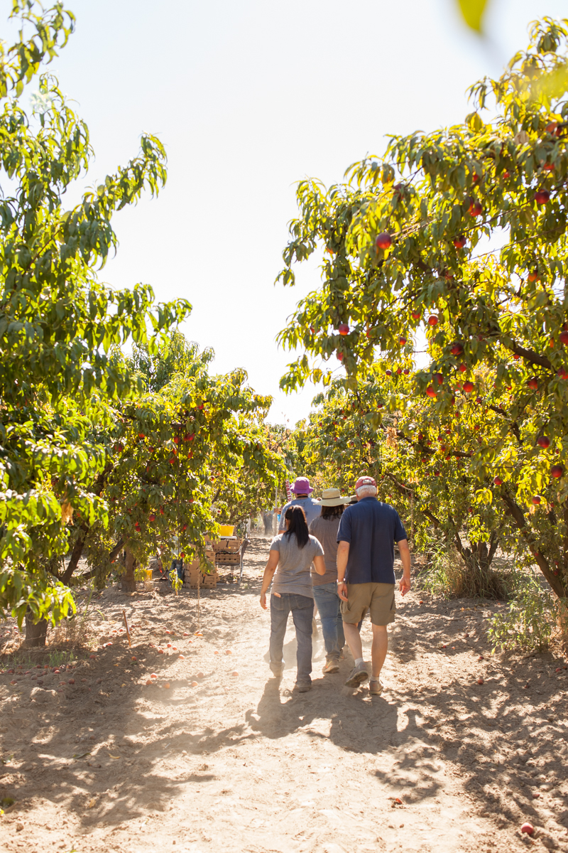 Off to pick some LeGrand nectarines.