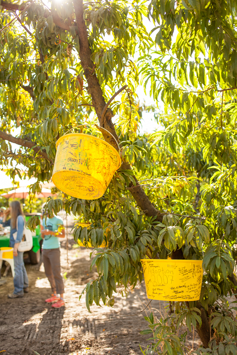 The participants are asked to sign a bucket. All the signed buckets from previous years were hanging from a tree.