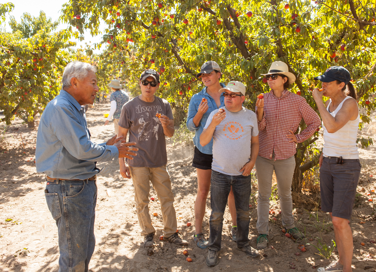 The group was busy with harvesting when Mas came by to say hello. He insisted that they break for a moment and try the nectarines straight off the trees. As the group ate the fruit, he described the attributes of a great nectarine.