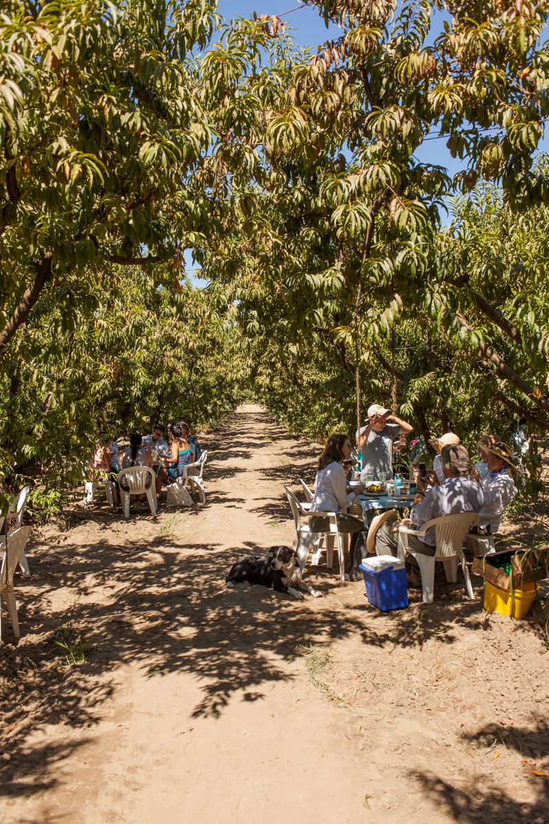 Tables were set up around the orchard for people to eat, rest and socialize.