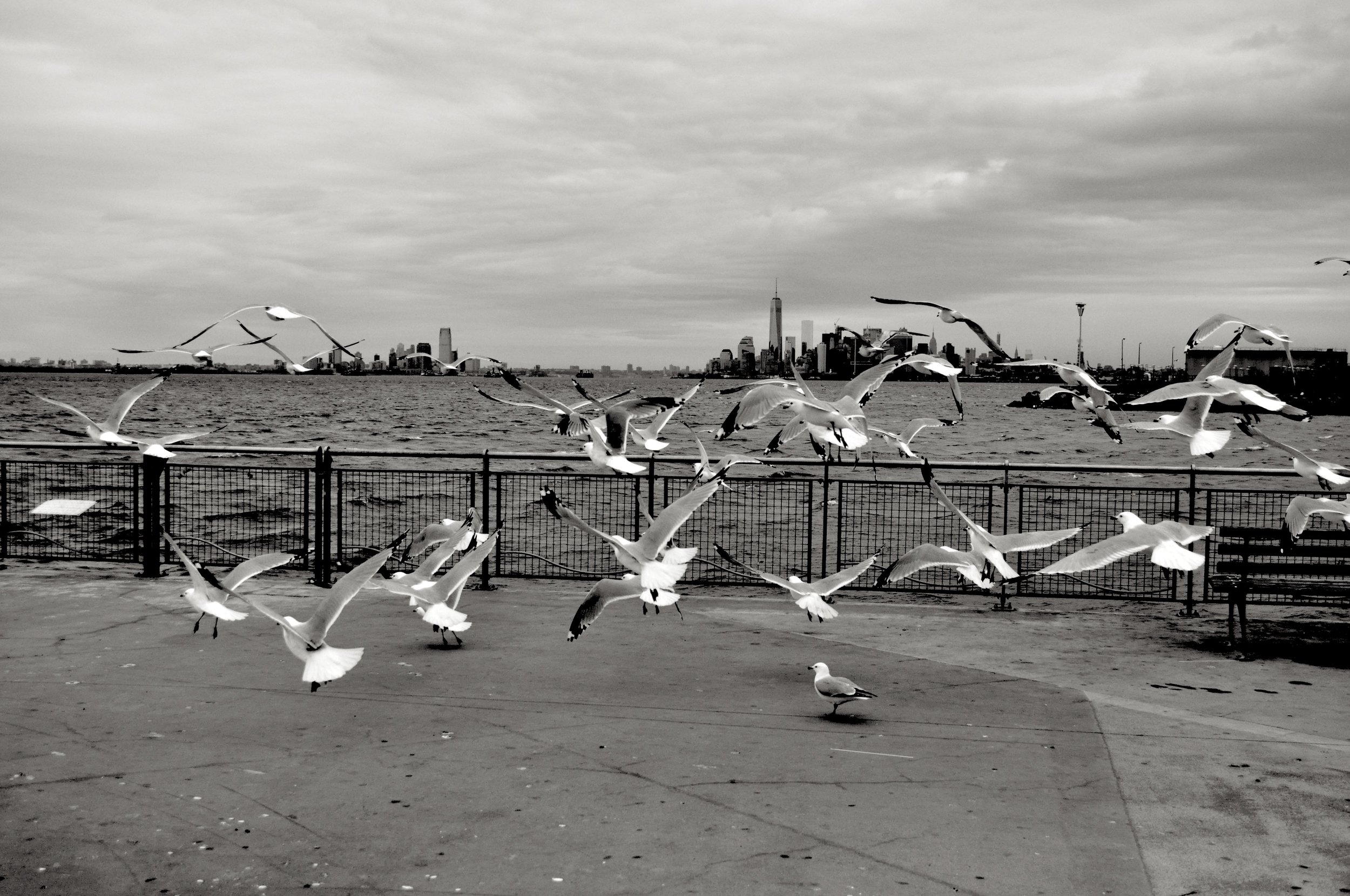 Bay Ridge Birds T.JPG