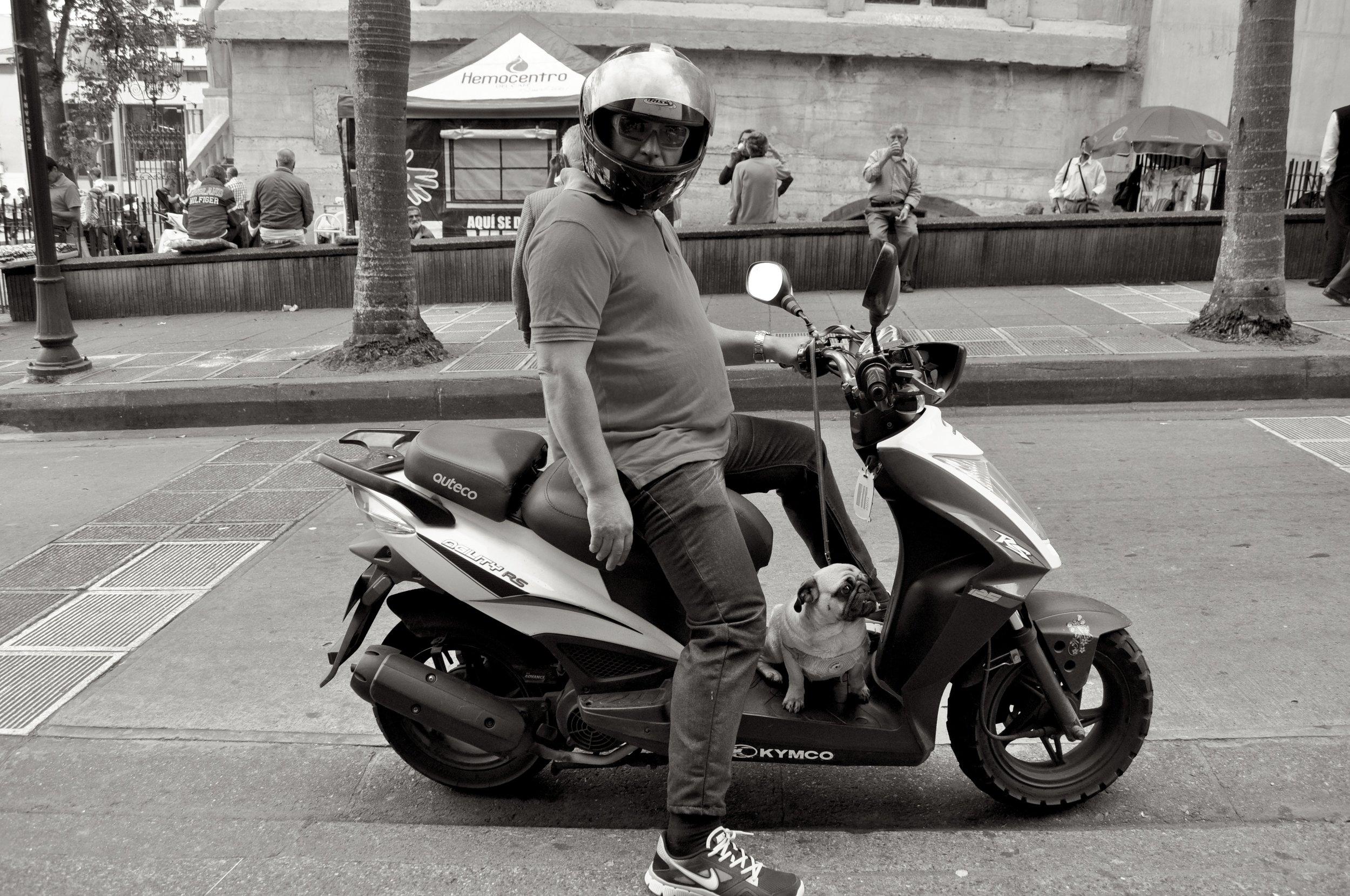 Pug Moto T.JPG